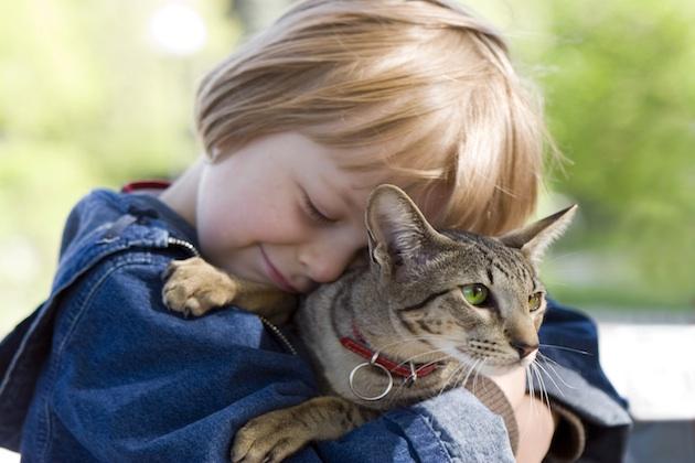 Cum si când luam o pisică în brațe