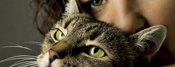 Cum si când luam o pisică în brațe?